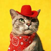 http://aboutcatsss.narod.ru/img/choice3.jpg
